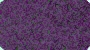 deep bold purple plush carpet for 
